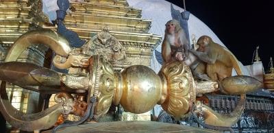 affentempel-kathmandu